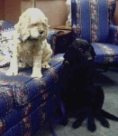 judsondogs1
