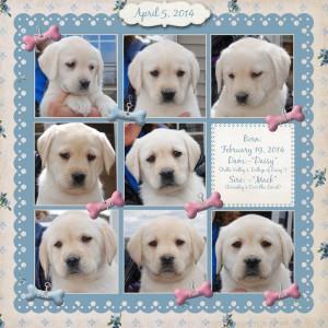 all pups collage medium